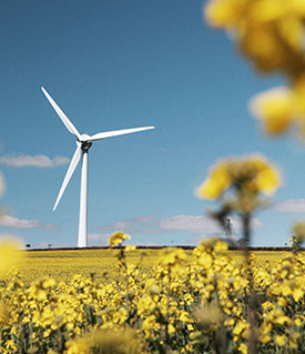 National Grid ESO - wind turbine and yellow flowers